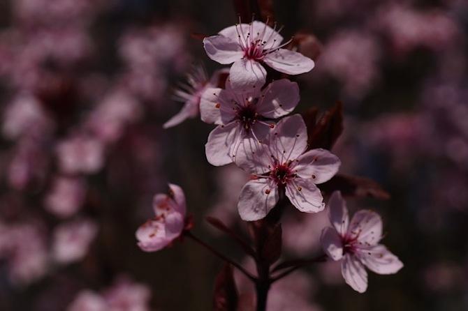 fiore amolo