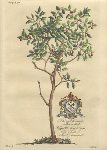 semi di pompelmo