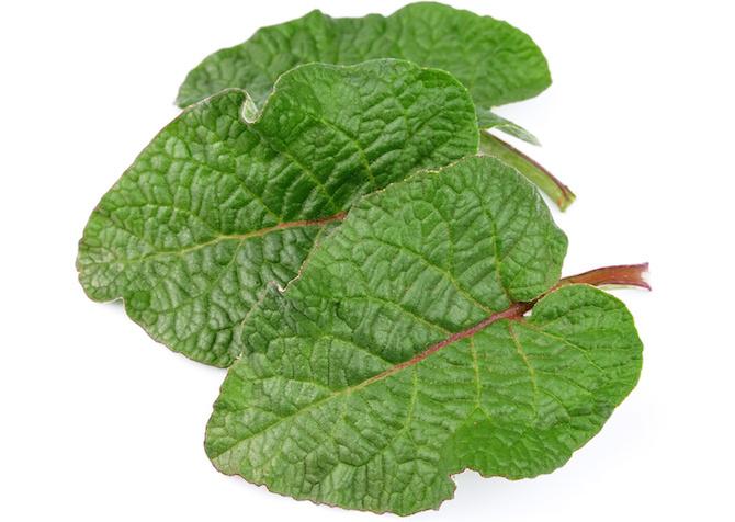 bardana foglie