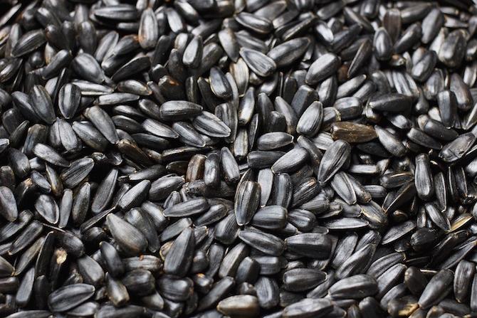 semi girasole neri