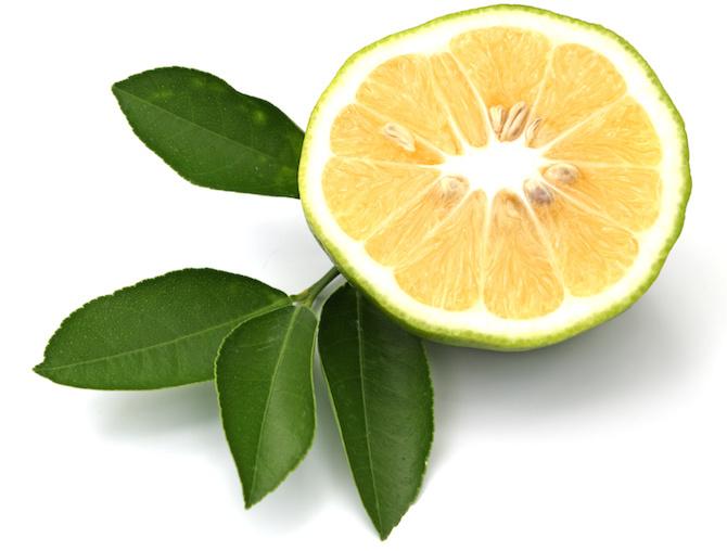 piante disinfettanti e battericide bergamotto