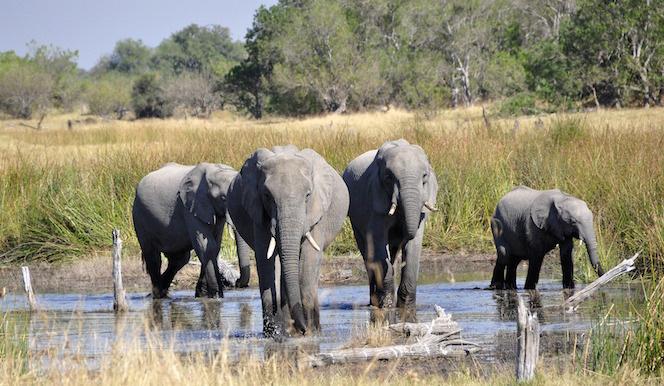 luoghi naturali parco okavango