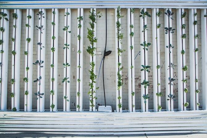 parete verde green facade