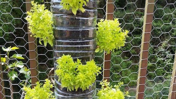 parete verde orto idroponico