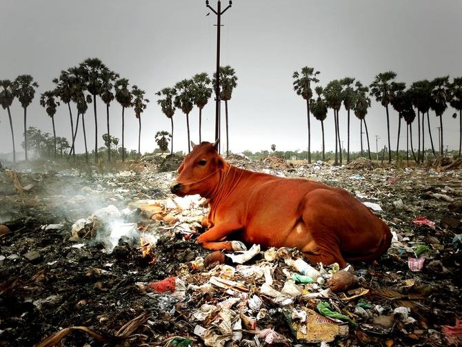 plastic-cow