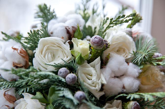 fiori-di-cotone