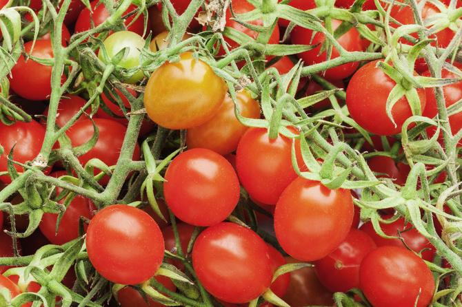 pomodori-ciliegini