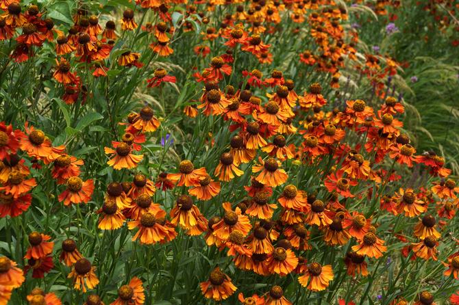Fiori Gialli O Rossi.10 Fiori E Piante Per Il Giardino D Autunno Cure Naturali It