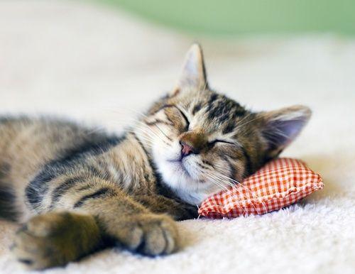 Dormire bene, consigli, posizioni e rimedi naturali