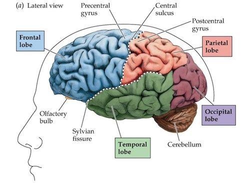 Cervello, disturbi e rimedi naturali