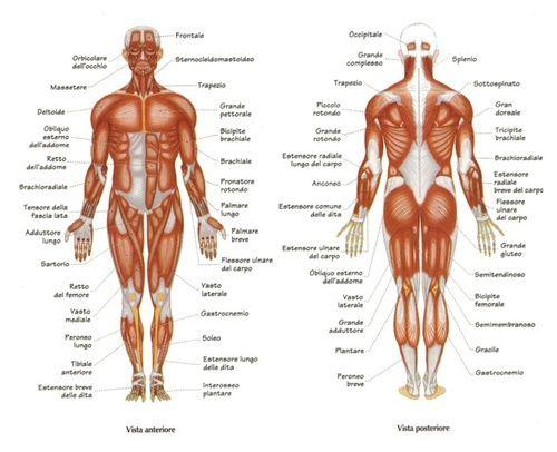 Rimedi naturali per il mal di pancia: un espediente per ogni tipo di dolore