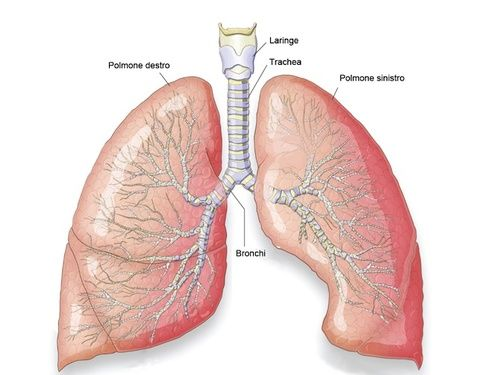 Polmoni, disturbi e rimedi naturali