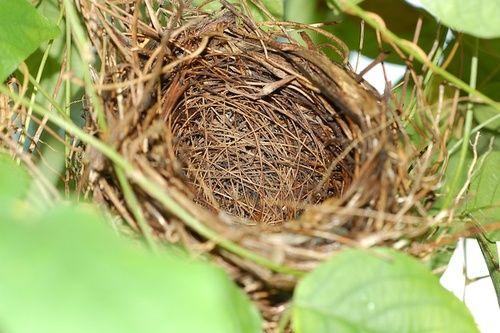 Sindrome del nido vuoto come affrontarla