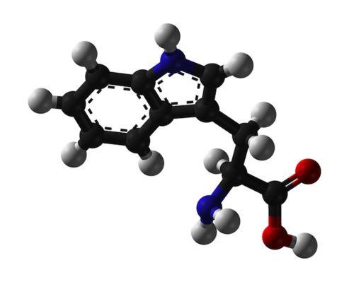 Molecola di triptofano