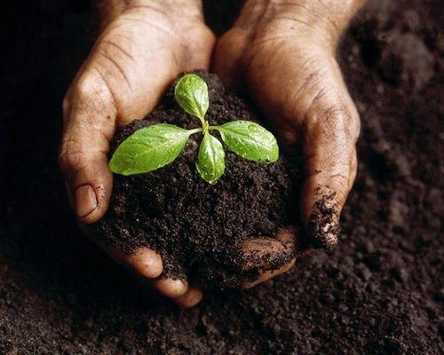 compost e concimi ecologici