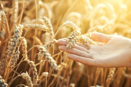 Mopur dal grano