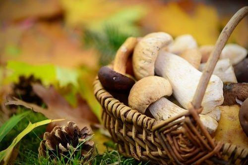 Funghi, uso e proprietà
