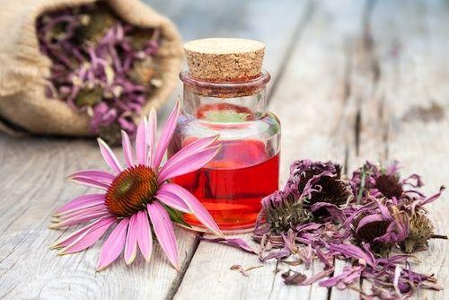 Echinacea, proprietà e uso