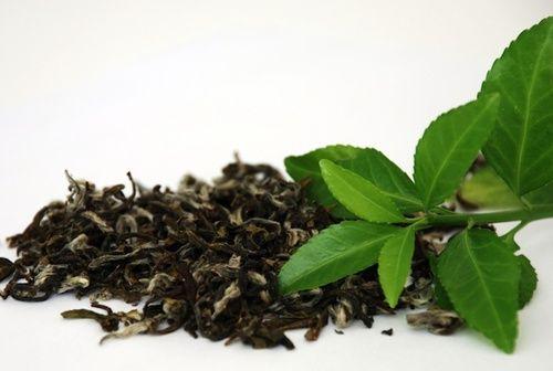 Tè verde tra i cibi antiosidanti