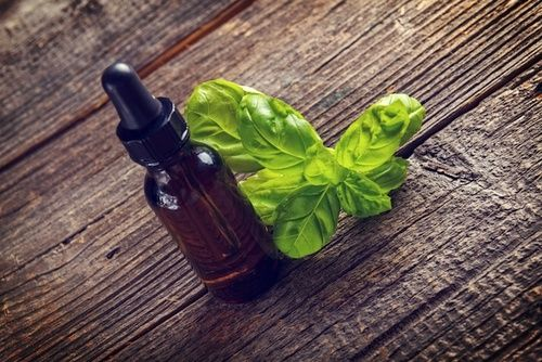 Proprietà e controindicazioni dell'olio essenziale di basilico