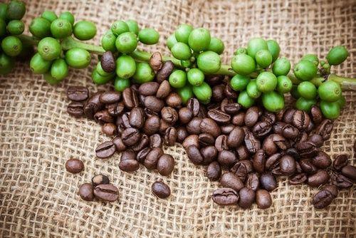Caffè tra i cibi bruciagrassi