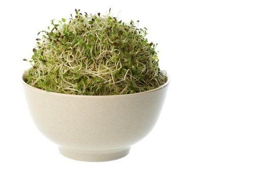 Germogli alfalfa
