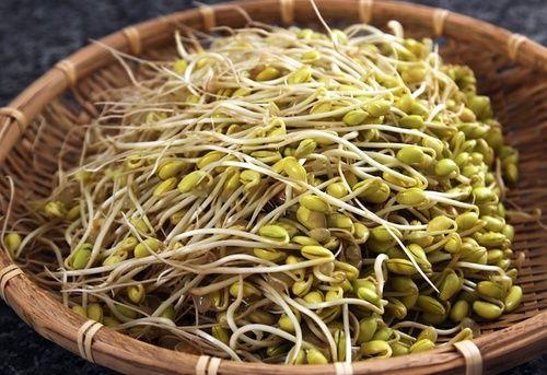Germogli di soia verde