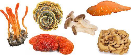 Funghi medicinali e intossicazione