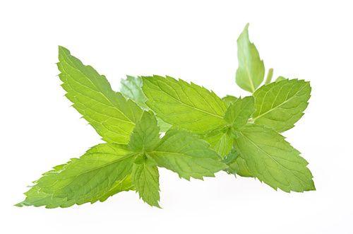 il tè alla menta piperita è usato per perdere peso