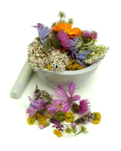 Erbe e piante officinali