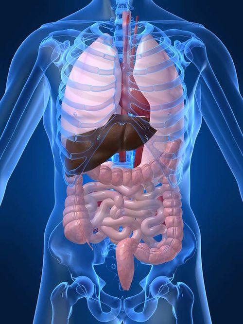 Organoterapia