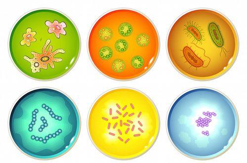 Microbi per la terapia microbiologica
