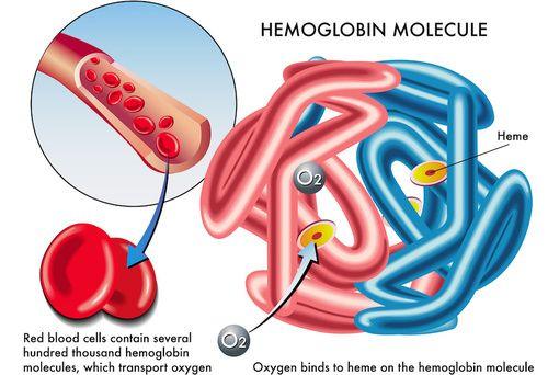 Molecola di emoglobina