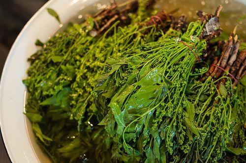 Olio di neem contro le pulci