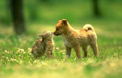 Salute cani e gatti