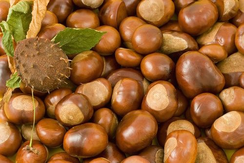 Marroni: proprietà, valori nutrizionali, calorie