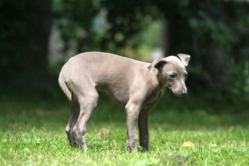 Costipazione cane gatto