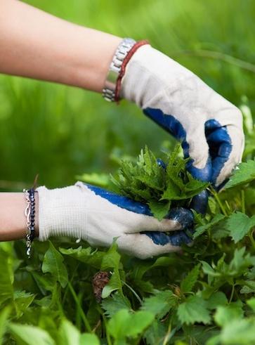 Le piante spontanee