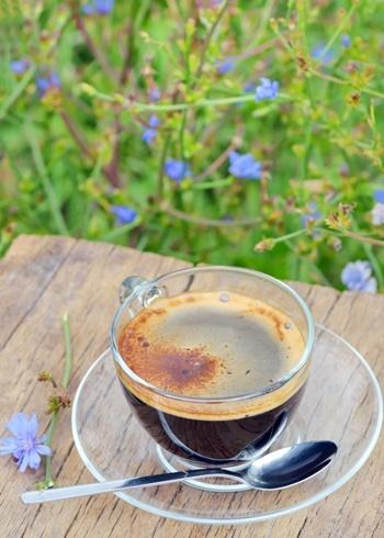 Ccaffè di radice di cicoria: la ricetta