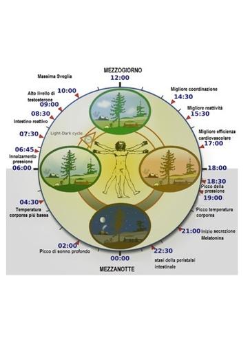 I ritmi circadiani ormonali