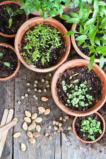 Calendario lunare e le semine