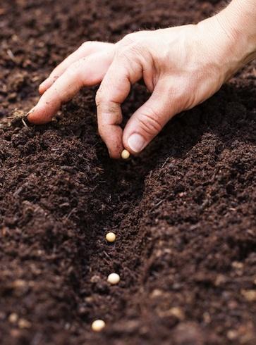 Come fare la semina