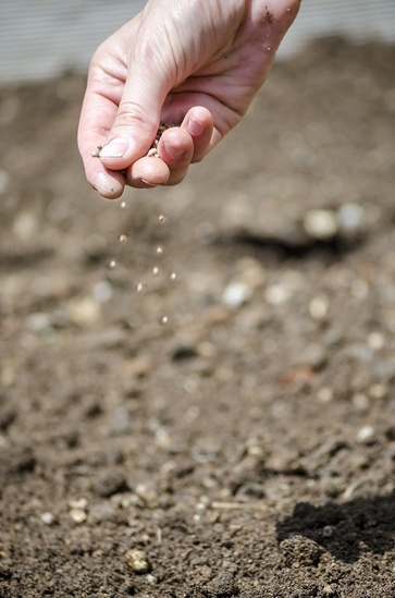 Consigli per le semine di marzo