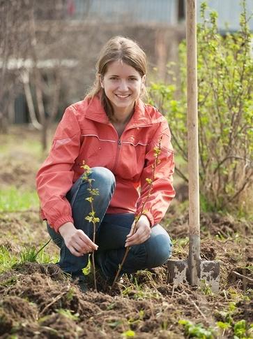 Talee e polloni: come propagare le piante