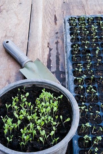 Semine in semenzaio e a dimora in aprile