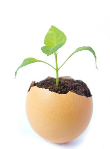 Uova di semi di lino