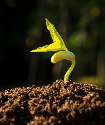 Le semine di maggio