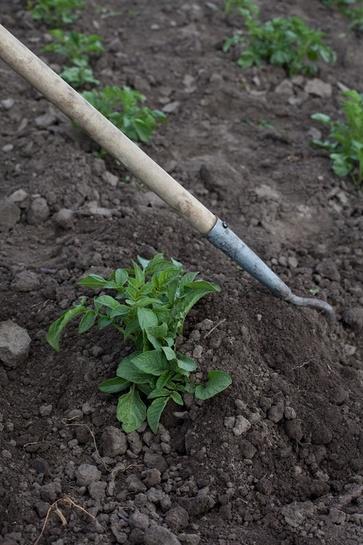 Consigli di lavorazioni delll'orto di maggio