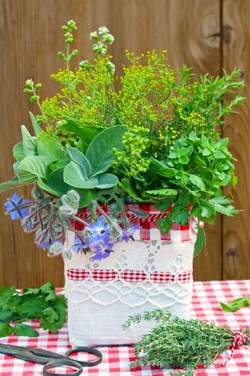 Piante spontanee commestibili di maggio: gli aromi