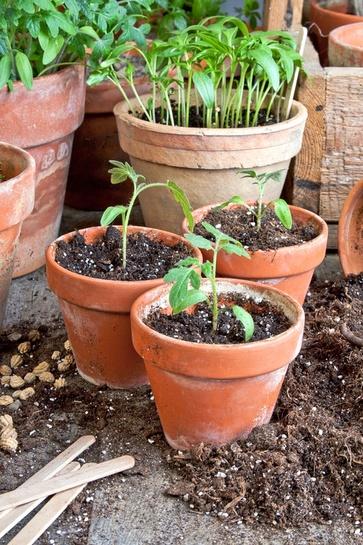 Semine e trapianti nell'orto di luglio
